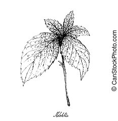 desenhado, melokhia, fundo branco, mão