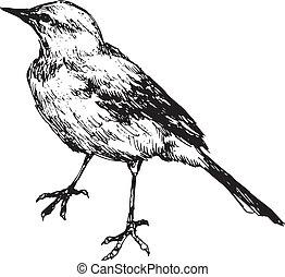 desenhado, pássaro, mão