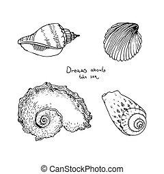 desenhado, shells., jogo, mar, mão