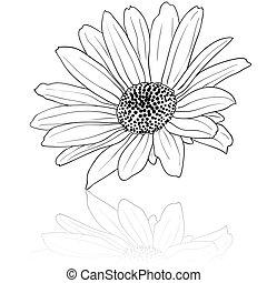 desenhado, vetorial, ilustração, mão