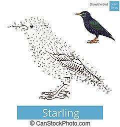 desenhar, vetorial, starling, pássaro, aprender