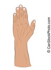 desenho, human, ilustração, branca, escova, cima, mão levantada, experiência., vetorial, fingers.