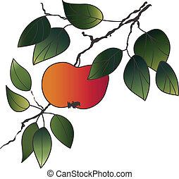 desenho, maçã