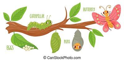 desenvolvimento, ovos, vetorial, árvore, cycle., stages., caricatura, inseto, fauna, illustration., pupa., cute, insetos, borboletas, lagartas, transformação, crescendo, ramo, vida, lagarta, borboleta