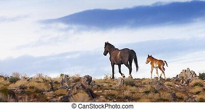desert., 野生的馬, 內華達, 野馬