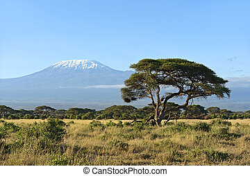 Desert African savannah in Amboseli National Park. Kenya. Africa
