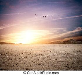 Idylic landscape of a desert at sunset