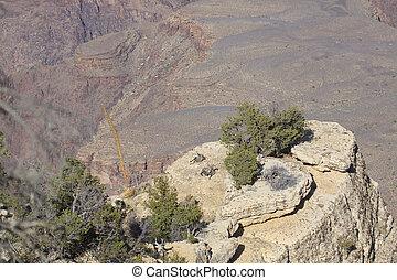 Desert Bighorns at Grand Canyon