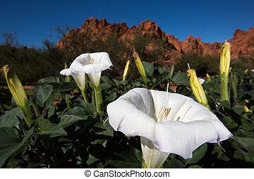 desert bloom closeup in nevada