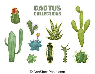 Desert cactus collection. Agave cactus striped leaf mexican ...