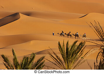 Desert - Camel Caravan on Africas desert