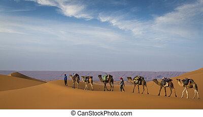 Desert caravan - Camel caravan moving in Sahara desert in...