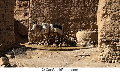 Desert donkey with saddle standing in front of brick desert ...