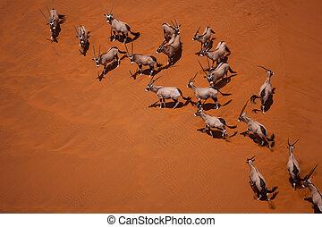 desert, dune, sand, landscape, africa, namibia, oryx, ...
