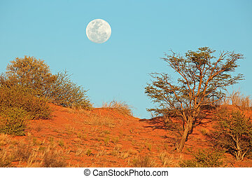 Desert dune with moon