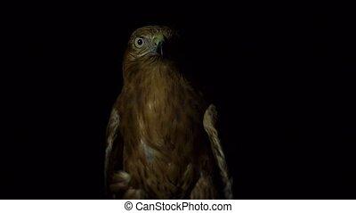 Desert eagle eye focusing on the target in night Slow motion