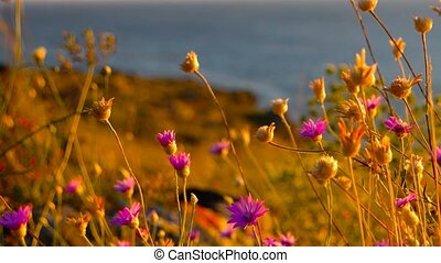 Desert Flowers On The Coast Of Azov Sea On Crimean Peninsula