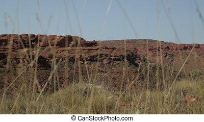 Desert grass and dry sandstones, Australia Outback - Wide...