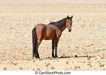 Desert Horses, Namibia