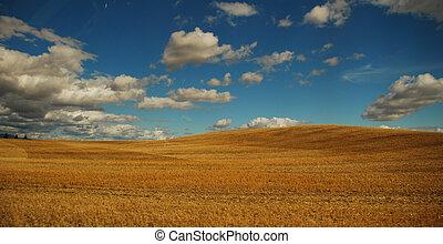 Desert in clouds