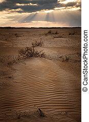 Desert in the sunset