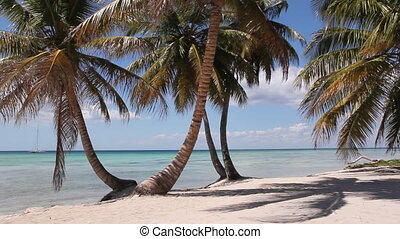 Desert island beach. - Palm trees with beach and beautiful...