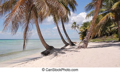 Desert island shoreline. - Palm trees with beach and waves....