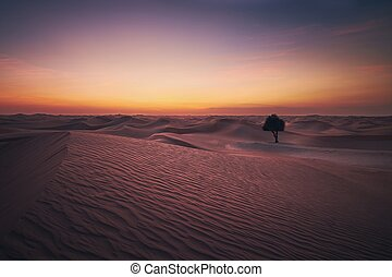 Desert landscape at dusk