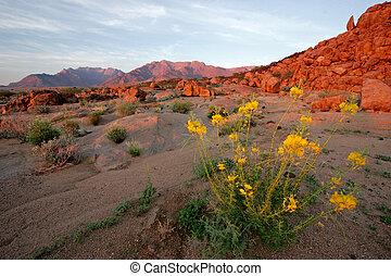 Desert landscape at sunrise, Brandberg mountain, Namibia