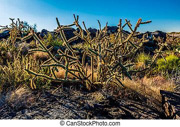 Desert Landscape in New Mexico