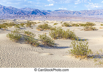 desert landscape in the death valley without people
