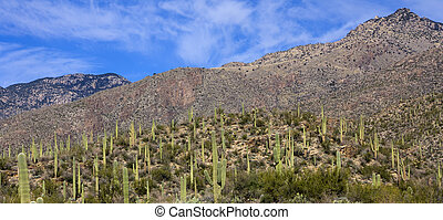 Desert Landscape in Tucson Arizona