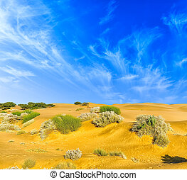 Desert Landscape. Nature background with sand, desert plants and blue sky