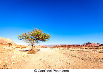 Desert landscape with a lone tree at Timna National Park in...