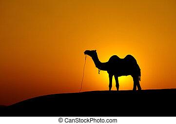 Desert landscape with camel at sunset