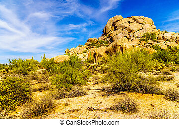 Desert Landscape with Cholla and Saguaro Cacti at the Boulders in the Desert