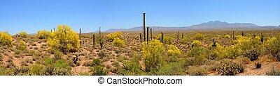 Desert Mountains Panorama - Four peaks desert mountains...