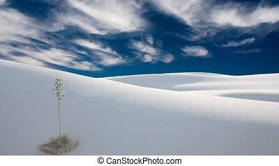 Desert plants. White sand dunes.