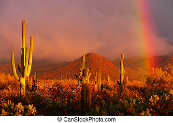 Desert Rainbow - Rainbow sunset at the Saguaro National...