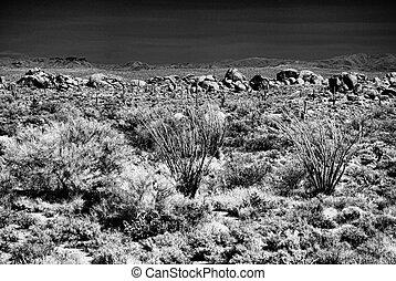 Desert Rocks and Ocotillo