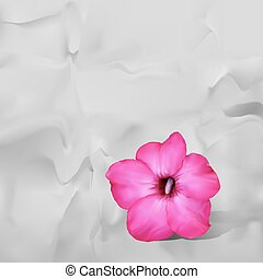 Desert rose flower with shadow on white paper background