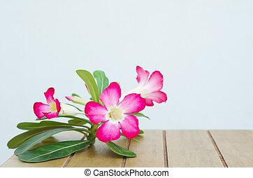 Desert Rose on wood table