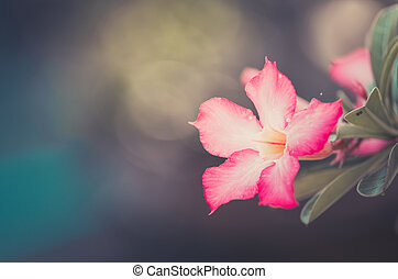 Desert Rose or Impala Lily or Mock Azalea flower vintage - ...