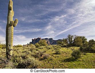Desert saguaro cactus tree