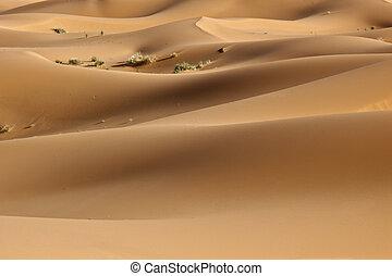 desert sand dunes in the Sahara