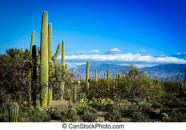 Desert Scape - Wide view of the Tucson countryside