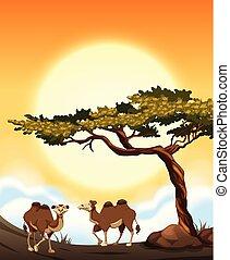 Desert scene with camels
