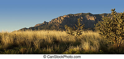 Evening light bathes Albuquerque's Sandia Mountains and desert flora in golden light