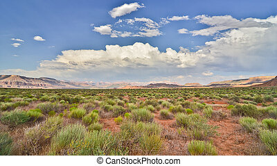 Desert Scrubland - The desert has its own kind of beauty.