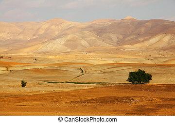 Desert Sinai in a morning - Desert Sinai in the early...